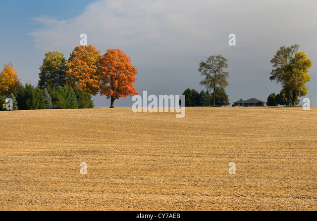 Trees on the crest of a hill of harvested cropland in the Fall with house Caledon Ontario Canada - Stock Image