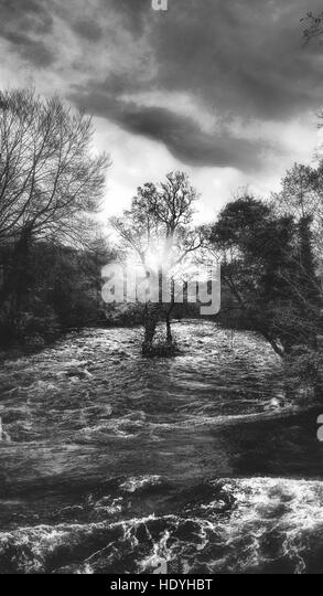 tree in the middle of violent river - Stock Image