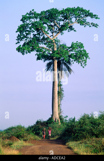Deforestation, Ivory Coast - Stock Image