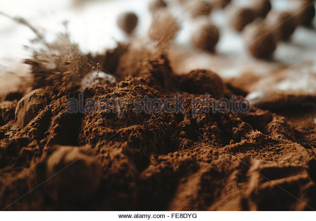 the making of cocoa and chocolate Cocoa prices and income of farmers share in the global added value  the cocoa farmers and their families are the losers in a lucrative cocoa and chocolate industry.