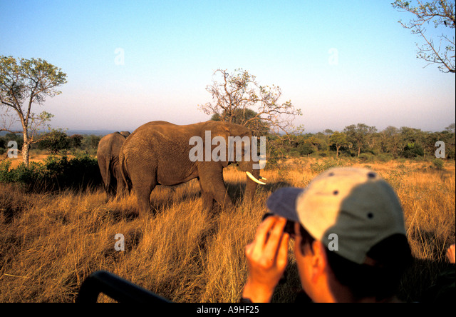 South Africa Tourists viewing elephants at close range Sabi Sabi game reserve - Stock Image