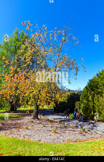 Adelaide hills landscape stock photos adelaide hills for Landscaping adelaide north