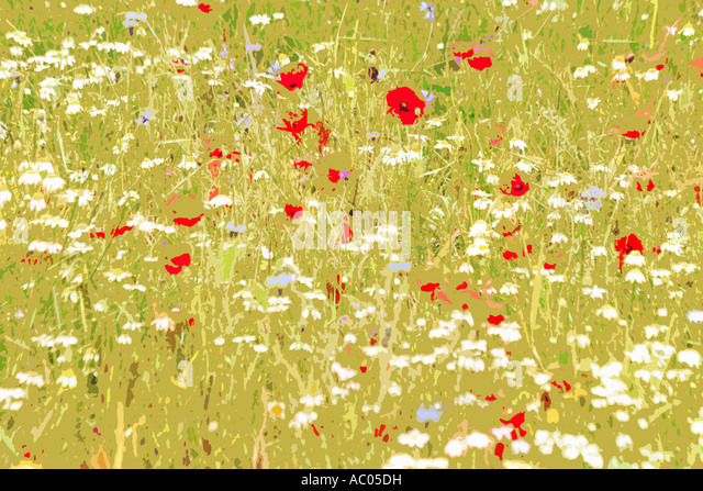 Abstract  wild flower design from the flowers on the Piano Grande Sibillini National Park Le Marche Italy - Stock Image