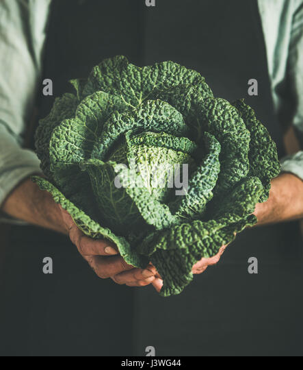 Man wearing black apron holding fresh green cabbagein in hands - Stock Image