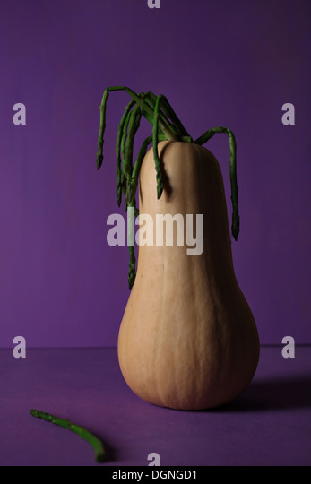 Squash Flower Pot - Stock Image
