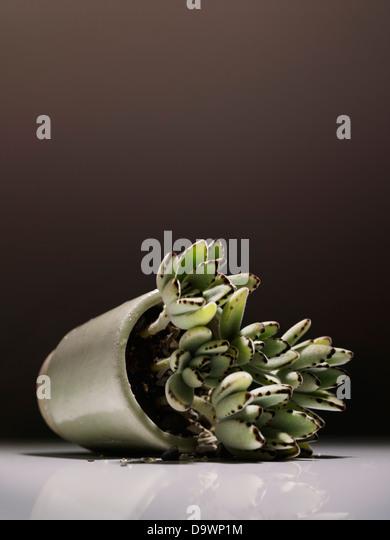Plant - Stock Image