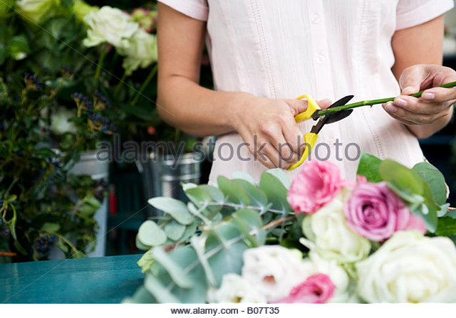 Woman's hands tying together a bouquet of pink and white roses - Stock Image