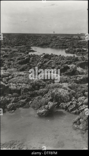 Photograph of corals from the Yonge collection - Stock-Bilder