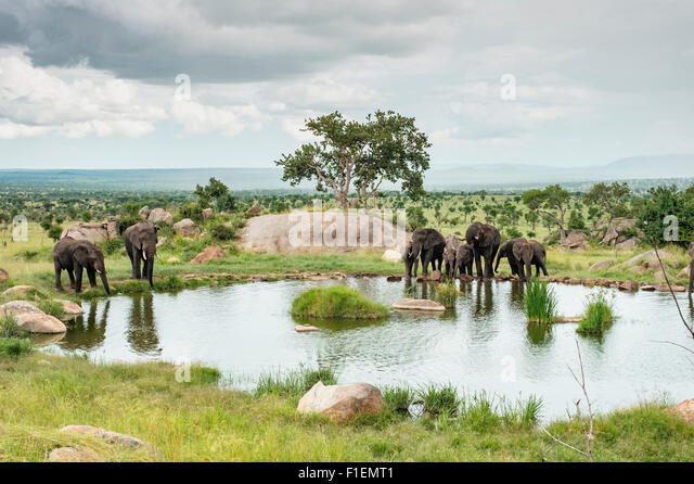 Elephants at watering hole, Serengeti Tanzania - Stock-Bilder