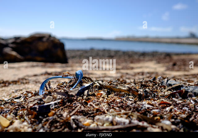 Close-Up Of Dirt On Beach By Sea - Stock Image