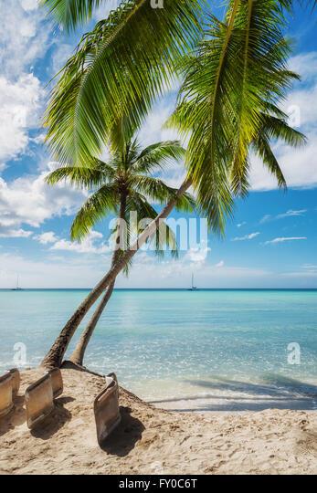 Tropical beach in Saona island, Dominican Republic - Stock Image