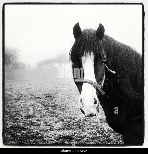 Black And White Misty : Black and white stock photos