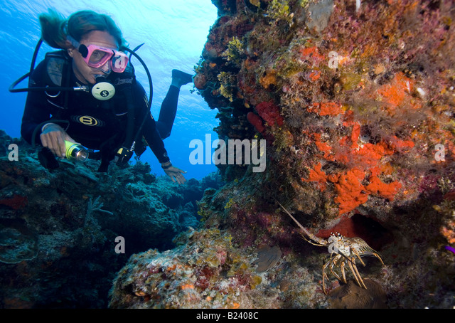 Diver And Lobster Stock Photos & Diver And Lobster Stock Images - Alamy