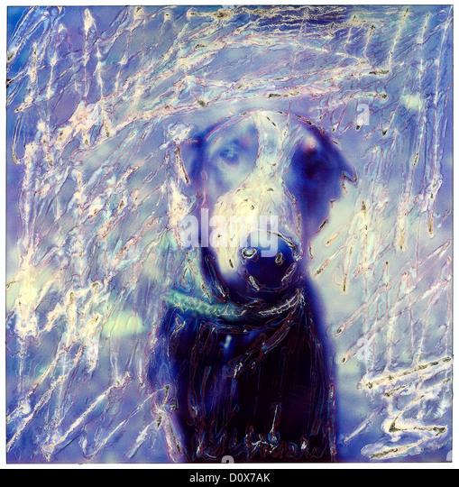 doberman pinschrer dog. sx-70 polaoid manipulation. ©mak - Stock Image