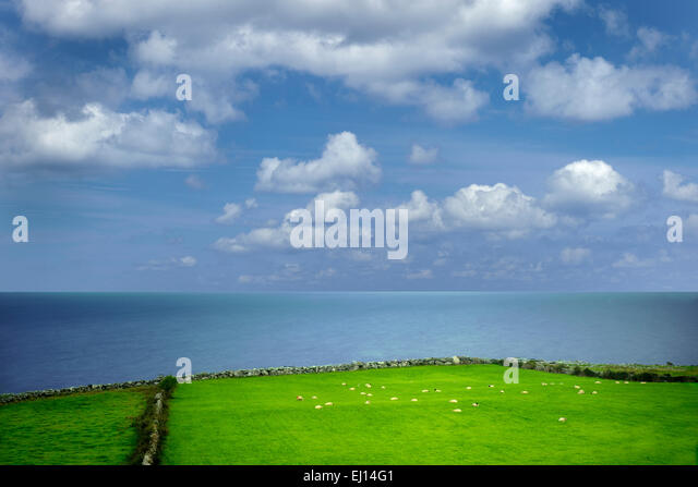 Sheep in pasture with ocean. Galway Bay, Black Head, The Burren, Ireland - Stock Image