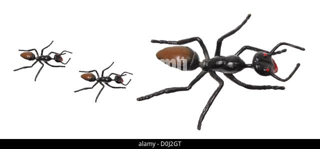 plastic ants stock photos  u0026 plastic ants stock images
