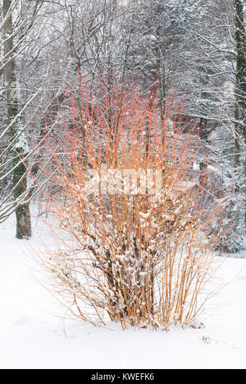Chestnut Tree Property Management Ltd
