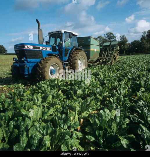 Armer Salmon elevator lifting fodder beet crop Oxfordshire - Stock Image