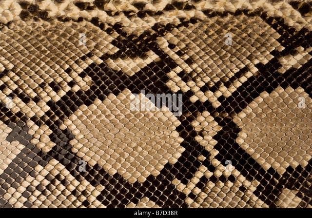 Snake Skin Stock Photos Amp Snake Skin Stock Images Alamy