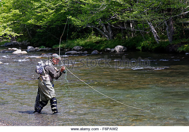 Man Fly Fishing in the Middle Prong River, Great Smoky Mountains National Park, Tennessee. - Stock Image