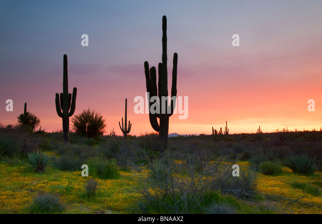 Tonto National Forest, East of Phoenix, Arizona. - Stock-Bilder