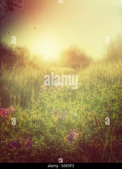 Morning glory landscape with flowers.Retro styled postprocessing. - Stock Image