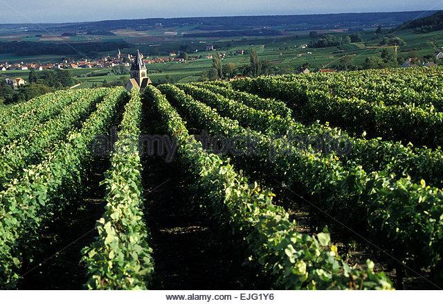 Montagne de reims stock photos montagne de reims stock for Champagne marne