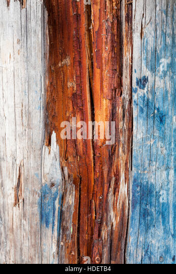 Decayed wood - Stock Image