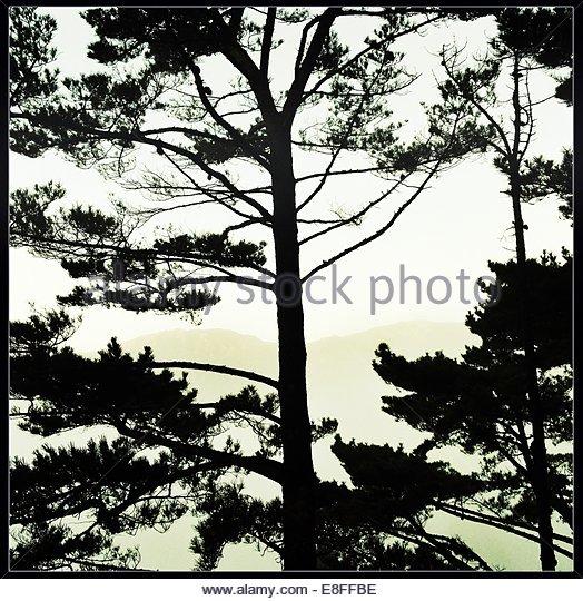 USA, California, Santa Barbara, Silhouette of treetops flooded with sunlight - Stock Image