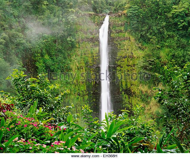 Akaka Falls.  'Akaka' translates to a 'split' or 'crack'.  The Big Island, Hawaii. - Stock Image