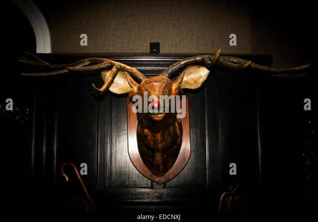 Deer Antlers Mounted Stock Photos Amp Deer Antlers Mounted