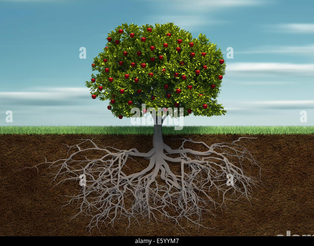 Conceptual tree with apple and root - this is a 3d render illustration - Stock Image