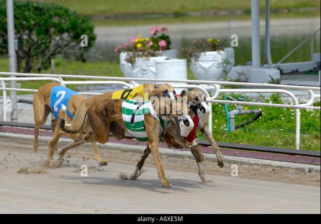 Sarasota Kennel Club Dog Racing Sarasota Fl