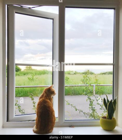 Ginger cat sitting at an open window - Stock Image