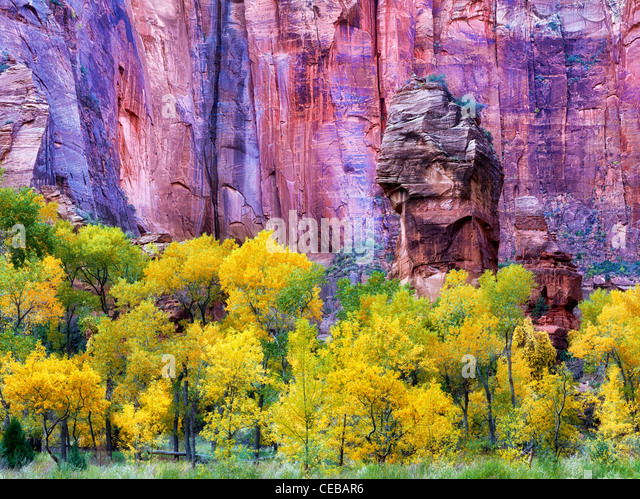 The Pulpit and fall color at the Temple of Sinawava. Zion National Park, Utah - Stock-Bilder