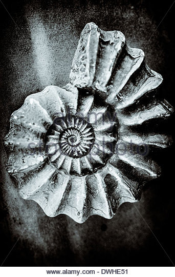 The concentric circles of a fossilized shell, England, United Kingdom. - Stock Image