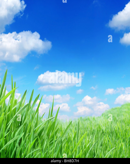 green grass against the sky - Stock Image