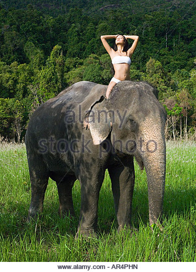 Young woman riding an elephant - Stock Image