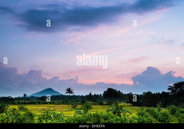 Sri Lanka landscape at sunrise, paddy fields near Dambulla, Central Province, Sri Lanka, Asia - Stock Image