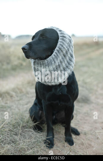 Black dog wearing gray knit scarf sitting on dirt road - Stock Image
