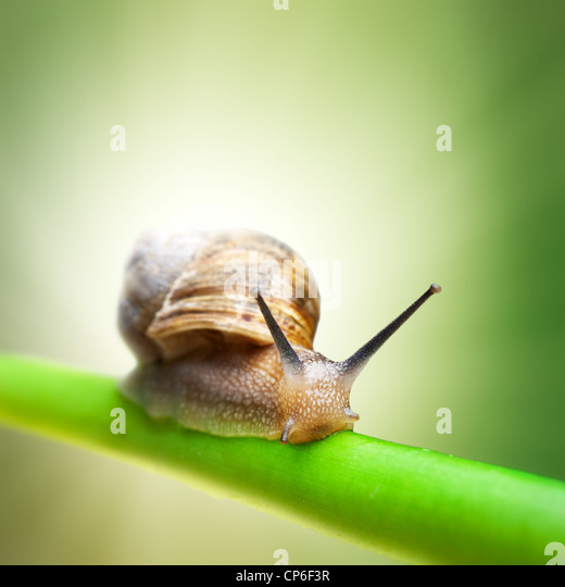 Snail crawling on green stem - Stock Image