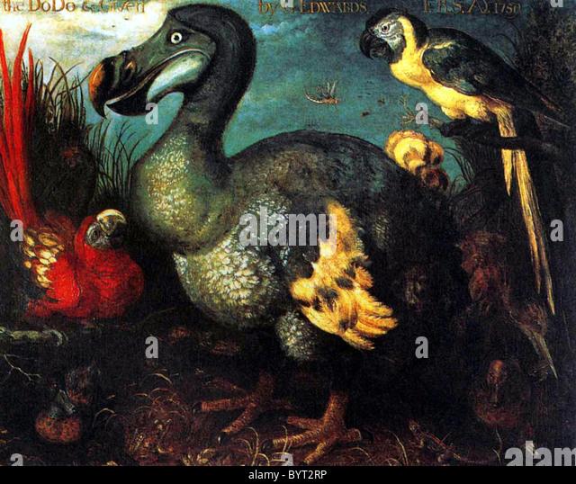 Dodo - Stock Image