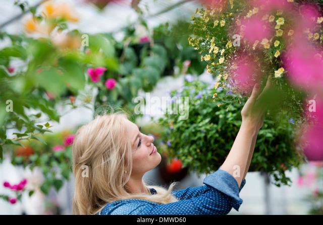 An organic flower plant nursery. A woman working. - Stock Image