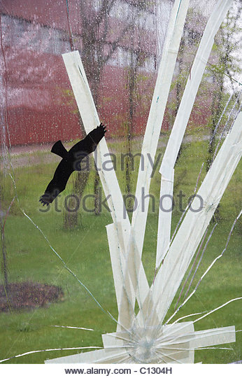 broken and repaired window - Stock Image