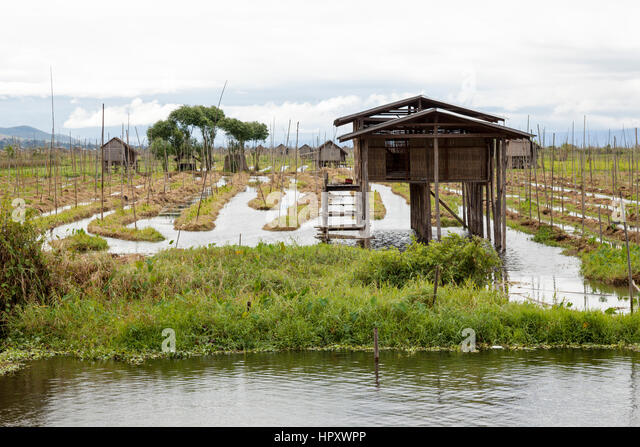 Carefully tended floating gardens on Lake Inle, at Maing Thauk (Myanmar). On the Inle water surface, Inthas gardeners - Stock Image