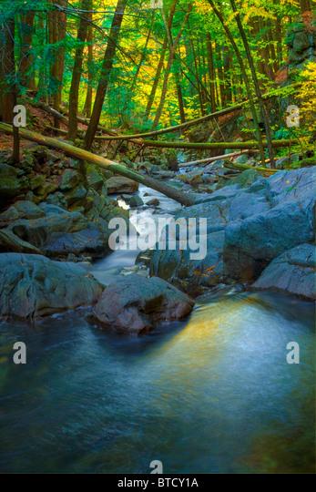 Shelving Rock Brook, near Lake George, Adirondacks, New York State - Stock Image