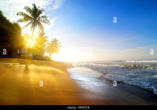 Palms on the sandy beach near ocean at sunrise - Stock Image