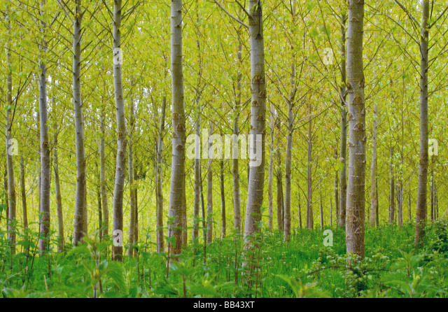 Spring forest - Stock Image