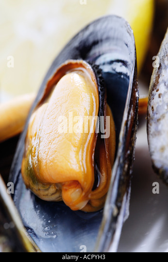 Mussel, close-up - Stock Image