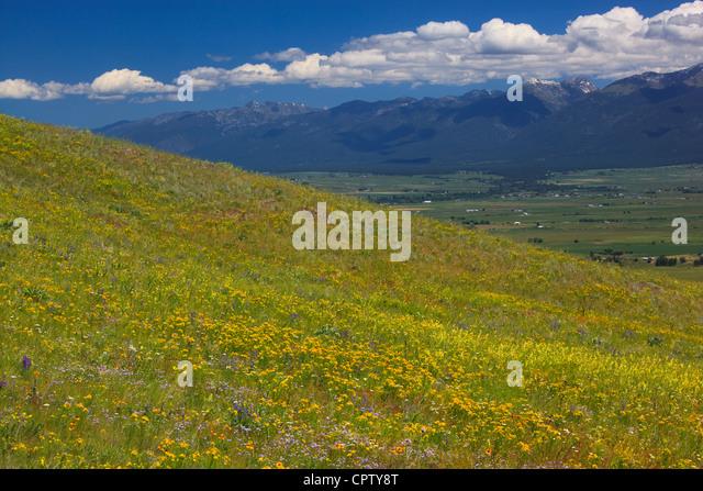 National Bison Range Wildlife Refuge Rolling prairie hillsides with summer flowers under cumulus clouds - Stock Image